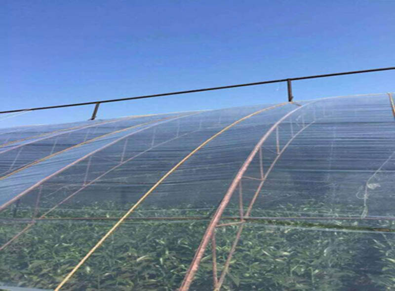 PE Agriculture Greenhouse Film
